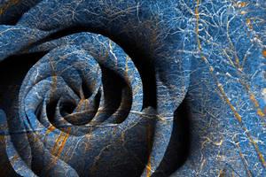 Susquehanna Winter Rose by somadjinn