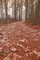 Frosty Mist Trail by somadjinn