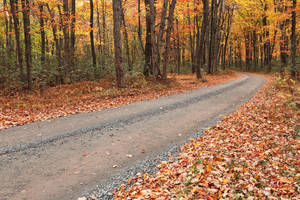 Winding Autumn Forest Road - Hickory Run by somadjinn
