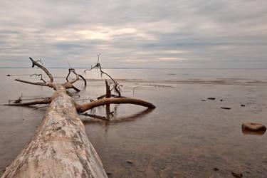 Dead Tree Bay (freebie) by somadjinn