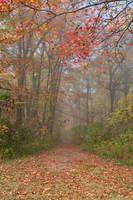 Misty Autumn Trail - Ferry Grove (freebie) by somadjinn