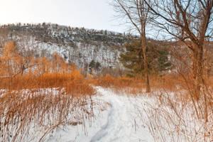 Winter McDade Trail (freebie) by somadjinn
