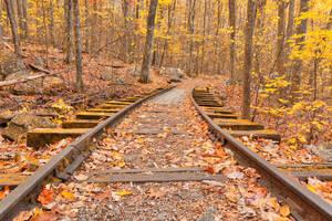Gold Autumn Logging Railroad by somadjinn