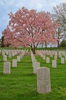 Arlington Cherry Blossom Cemetery by somadjinn