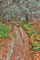 Frosted Appalachian Trail by somadjinn