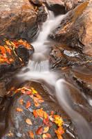 Autumn Fossil Stream by somadjinn