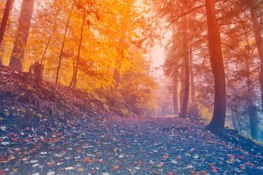Rainbow Mist Forest by somadjinn