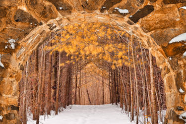 Gold Winter Pine Portal by somadjinn