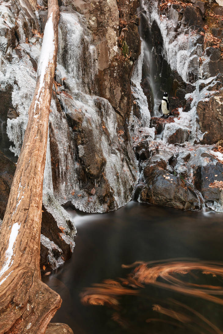 Winter Spheniscus Falls by somadjinn