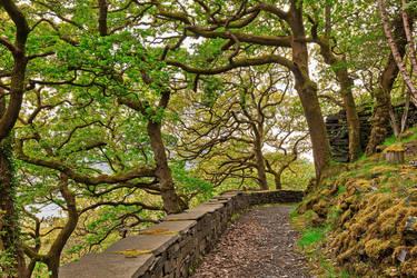 Dinorwic Woods Trail by somadjinn