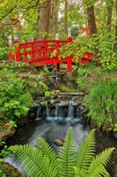Japanese Bridge Stream - Clyne Gardens by somadjinn