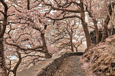 Welsh Fantasy Blossom Trail by somadjinn