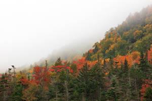 Autumn Fog of White Mountain (freebie) by somadjinn