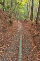 Juney Whank Forest Trail by somadjinn