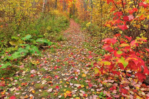 Autumn Harvey Forest Trail by somadjinn