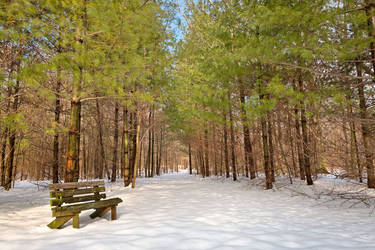 Winter Pine Trail by somadjinn
