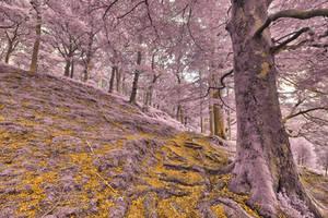 Dolbadarn Moss Forest Trail -Gold Amethyst Fantasy by somadjinn