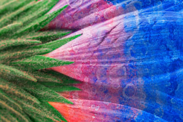 Vibrant Acrylic Daisy (freebie) by somadjinn