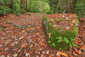 Autumn Moss Boulder Trail by somadjinn