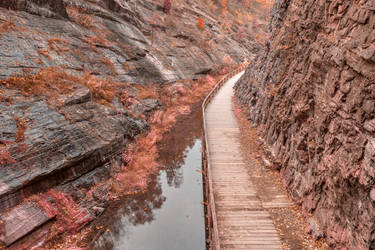Paw Paw Boardwalk Trail - Pink Pastel Fantasy by somadjinn