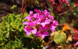 About of flowers VI by BillyNikoll