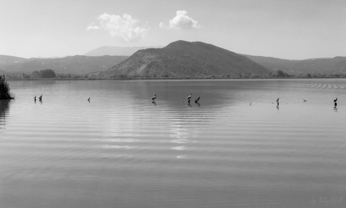 Birds in Lake Pamvotida by BillyNikoll