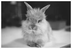 ma_rabbit by marymarycherry
