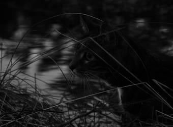 My Cat by jakobiaa