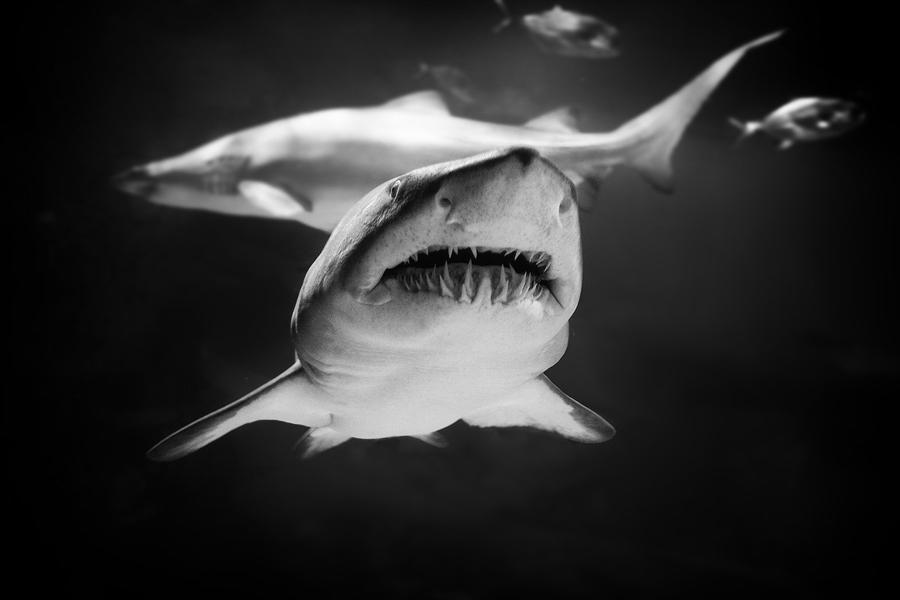 ...jaws I... by roblfc1892