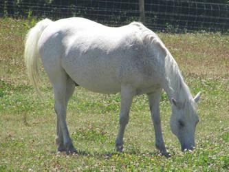 Milo the horse by Sia-Mon