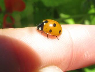 Ladybird friend by Sia-Mon