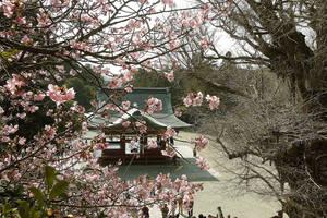 Cherry Blossom in Kamakura by nikonforever