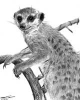 Meerkat by happylilsquirrel