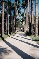 Jardim Botanico - RJ by anjosarda