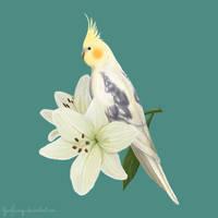 Pied Cockatiel by YardFlamingo