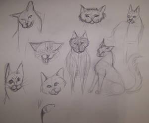 Cat Sketches by Kitsufox