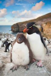 Rockhopper Penguin by chriskaula