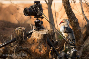 Behind the scenes by chriskaula