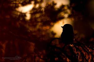 Last light by chriskaula
