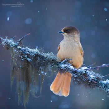 Harsh winter by chriskaula
