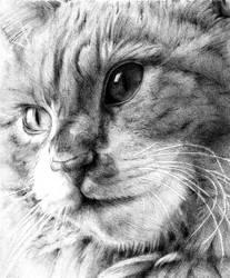 Cat by Annika-86