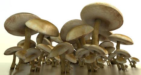A bunch of mushrooms by DennisH2010
