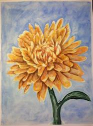 Chrysanthemum by Noxe-ApplePi