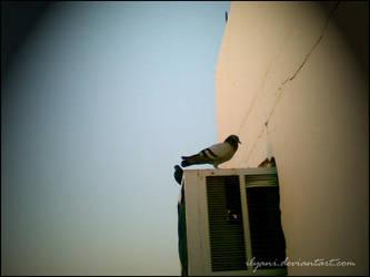 Pigeon in Makkah by ilyani