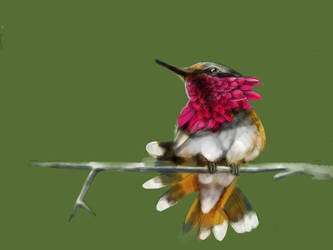 Hummingbird #2 by ceredwyn
