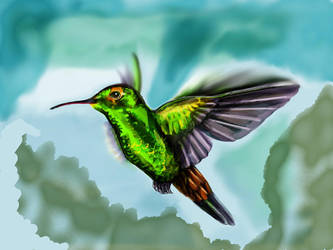 Hummingbird4 by ceredwyn