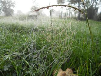 Dewey Filaments of Delicate Silk by darksporechild