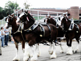 Clydesdales by IAmArkain