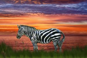 Zebra by the Sea by LoloAlien