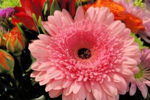Flowers by LoloAlien